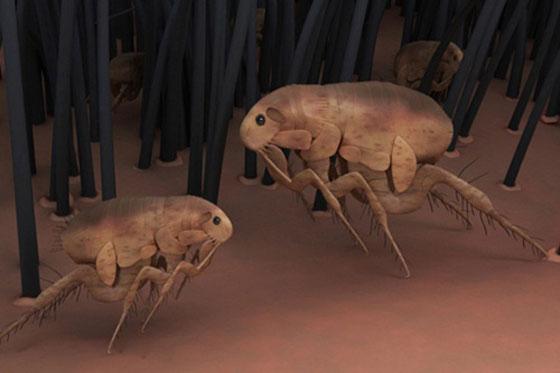 اغرب الأسلحة في الحروب: استخدام الحشرات صورة رقم 4