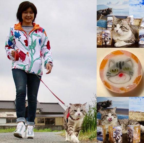 صورة رقم 2 - صور طريفة لمغامرات سندباد القطط حول العالم