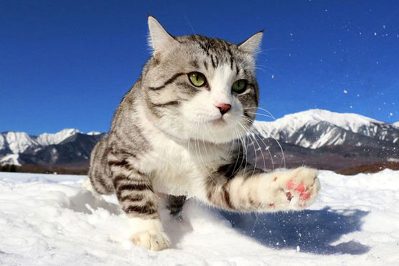 صورة رقم 3 - صور طريفة لمغامرات سندباد القطط حول العالم