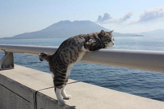 صورة رقم 4 - صور طريفة لمغامرات سندباد القطط حول العالم