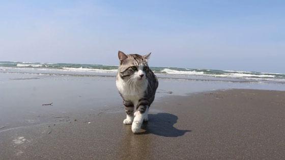 صورة رقم 5 - صور طريفة لمغامرات سندباد القطط حول العالم
