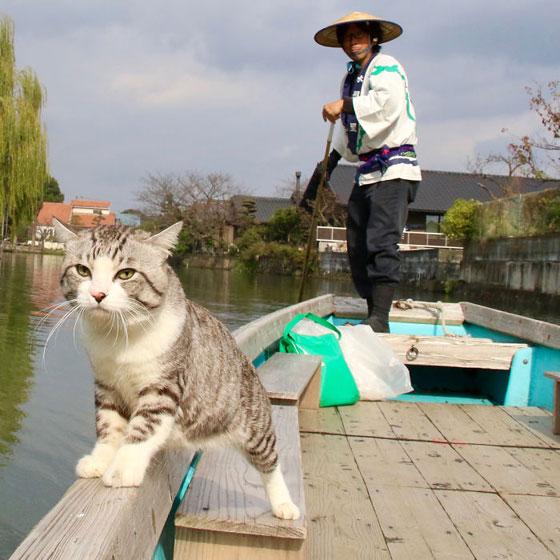 صورة رقم 6 - صور طريفة لمغامرات سندباد القطط حول العالم