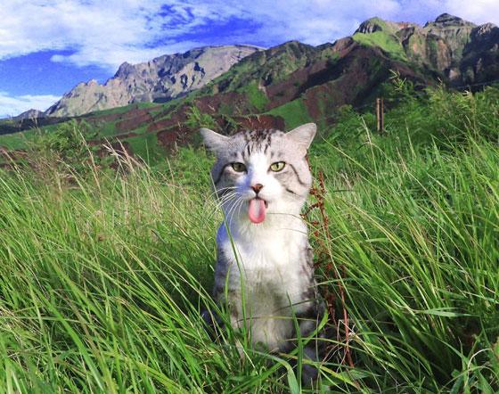 صورة رقم 7 - صور طريفة لمغامرات سندباد القطط حول العالم