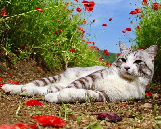 صورة رقم 8 - صور طريفة لمغامرات سندباد القطط حول العالم