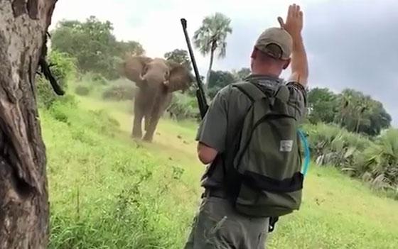 صورة رقم 1 - بالفيديو.. فيل غاضب يهاجم السياح خلال رحلة سفاري