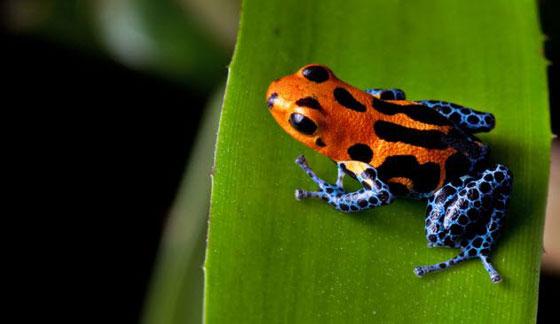 حيوانات سامة استخدمها العلم للمساعدة في شفاء المرضى صورة رقم 1