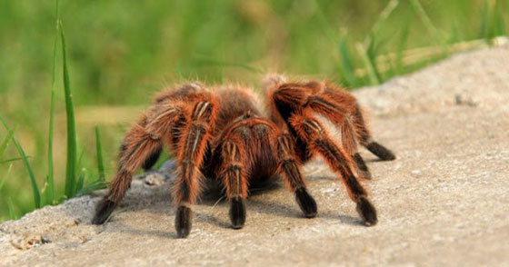 حيوانات سامة استخدمها العلم للمساعدة في شفاء المرضى صورة رقم 5
