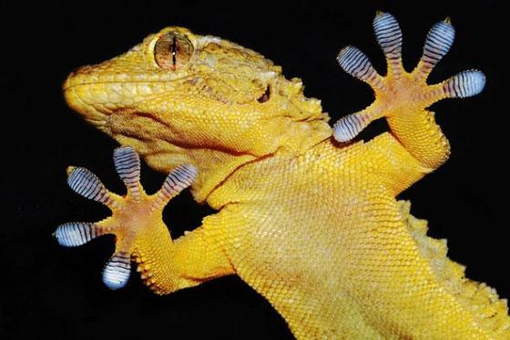 ابرز 10 اختراعات تم ابتكارها بفضل الكائنات صورة رقم 4