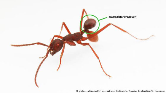 بالصور.. 10 كائنات حية اكتشفت حديثا، لم نكن نعلم بوجودها قبل الآن! صورة رقم 3
