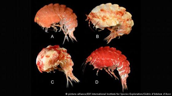 بالصور.. 10 كائنات حية اكتشفت حديثا، لم نكن نعلم بوجودها قبل الآن! صورة رقم 6