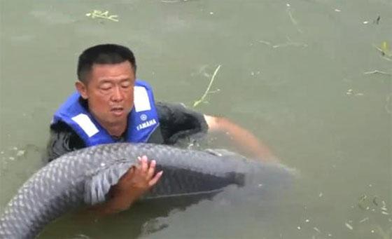 بالفيديو.. هذا ما حدث لصياد سحبته سمكة ضخمة الى المياه  صورة رقم 2