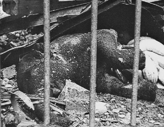 أحداث حزينة وطريفة وغريبة لا تعرفها عن الحرب العالمية الثانية صورة رقم 1