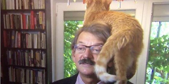 فيديو طريف.. قط يتسلق محاضرا جامعيا في بث مباشر صورة رقم 1