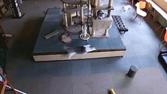 بالفيديو.. قطط تشعر بزلزال في اليابان قبل وقوعه صورة رقم 1