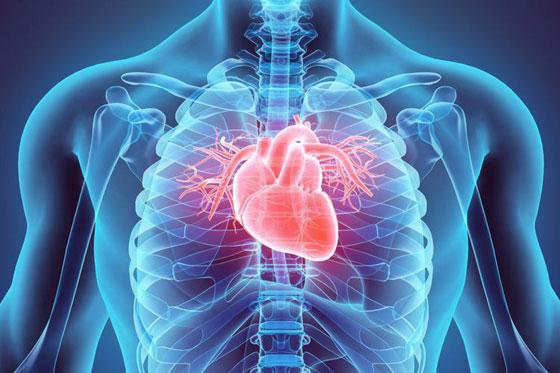 أسرار قلب الإنسان: يعشق الموسيقى وينبض 2.5 مليار مرة والضحك دواء له صورة رقم 2