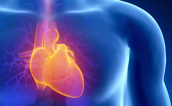 أسرار قلب الإنسان: يعشق الموسيقى وينبض 2.5 مليار مرة والضحك دواء له صورة رقم 4