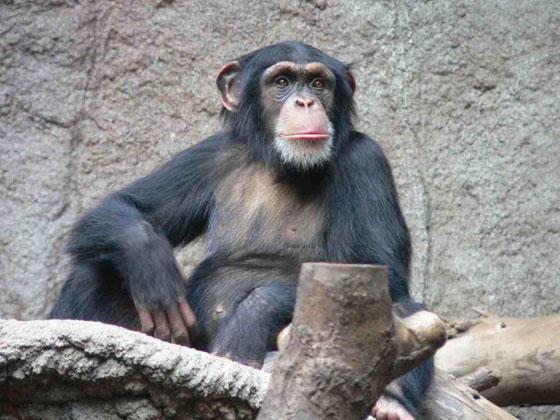 تعرفوا على أذكى 10 حيوانات في العالم  صورة رقم 1