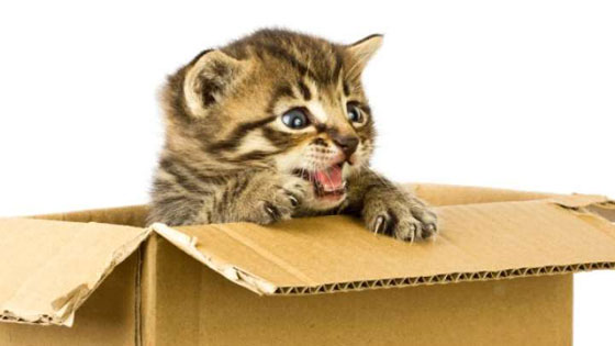 لهذا السبب القطط تحب للصناديق.. فيديو صورة رقم 3