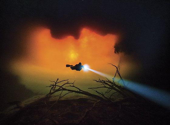 أشهر وأجمل الصور الفائزة بمسابقة التصوير تحت سطح الماء صورة رقم 2