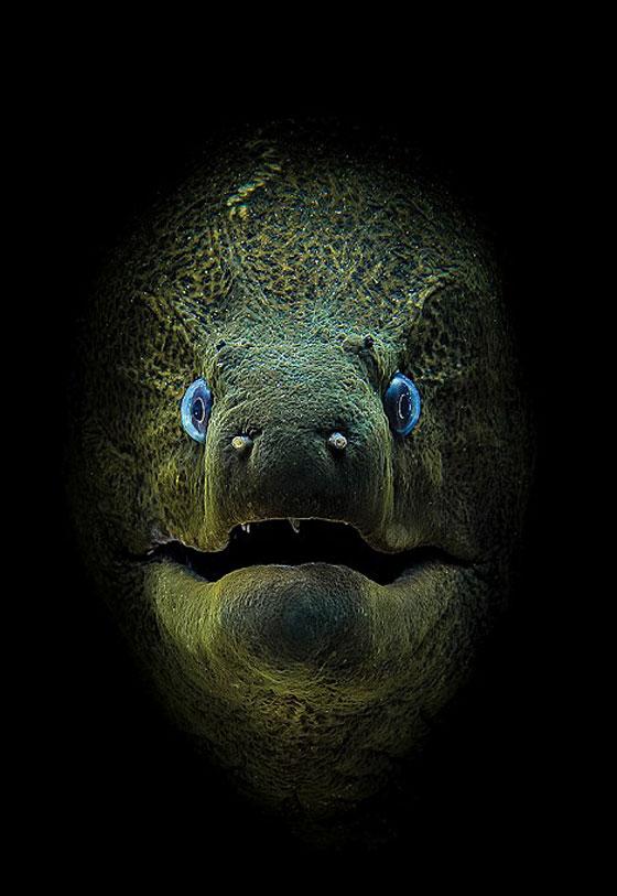 أشهر وأجمل الصور الفائزة بمسابقة التصوير تحت سطح الماء صورة رقم 1