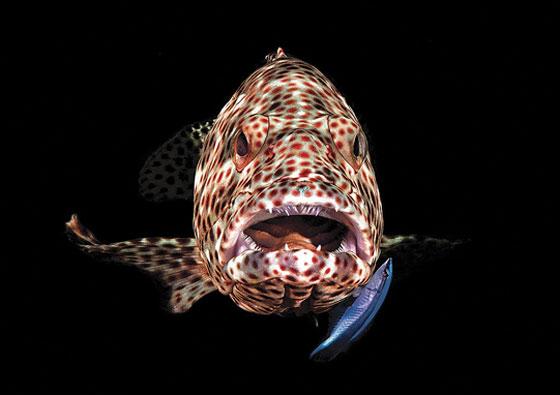 أشهر وأجمل الصور الفائزة بمسابقة التصوير تحت سطح الماء صورة رقم 9