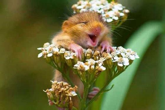 صورة رقم 3 - حقائق علمية جميلة ستجعلك تبتسم