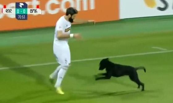 فيديو طريف.. كلب يقتحم ملعبا ويتسبب في تعطيل مباراة كرة قدم صورة رقم 3