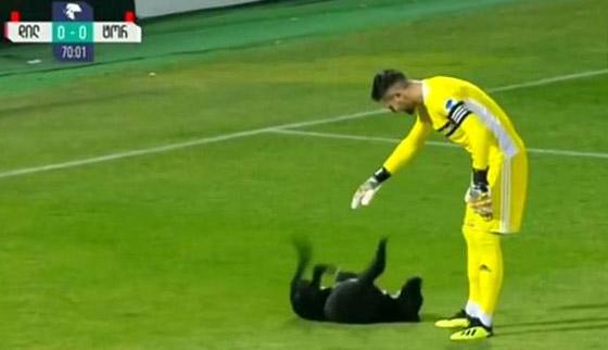 فيديو طريف.. كلب يقتحم ملعبا ويتسبب في تعطيل مباراة كرة قدم صورة رقم 4