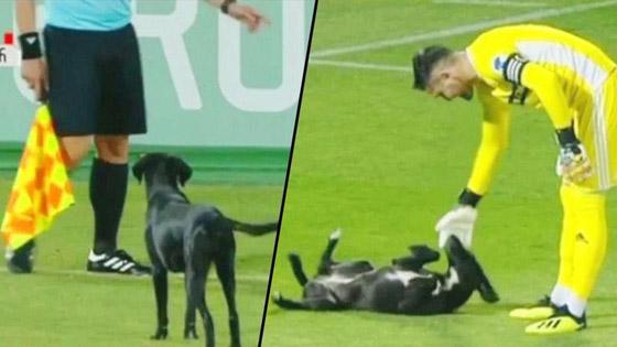 فيديو طريف.. كلب يقتحم ملعبا ويتسبب في تعطيل مباراة كرة قدم صورة رقم 6