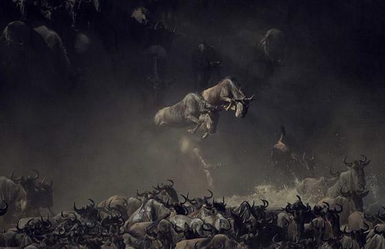 أبرز وأقوى الصور المشاركة في مسابقة سميثسونيان للتصوير صورة رقم 2