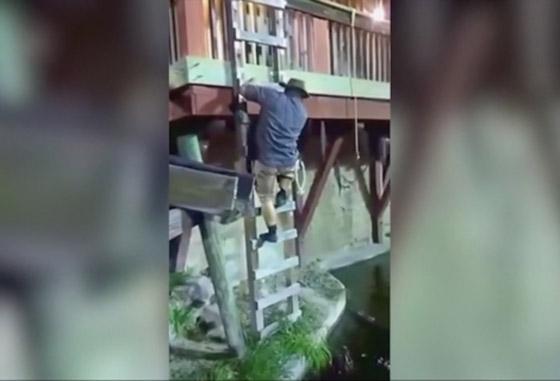 فيديو مروع.. شاهدوا لحظة سقوط رجل في حوض تماسيح! صورة رقم 1