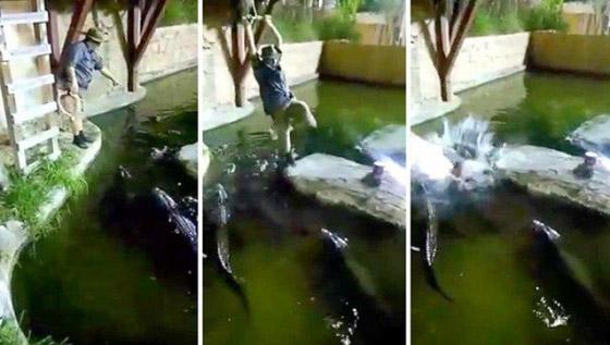 فيديو مروع.. شاهدوا لحظة سقوط رجل في حوض تماسيح! صورة رقم 3
