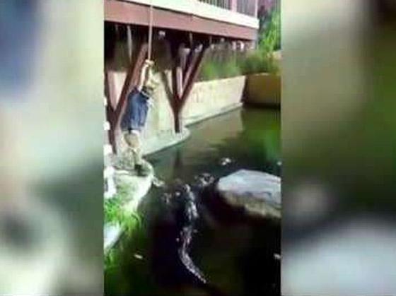 فيديو مروع.. شاهدوا لحظة سقوط رجل في حوض تماسيح! صورة رقم 2