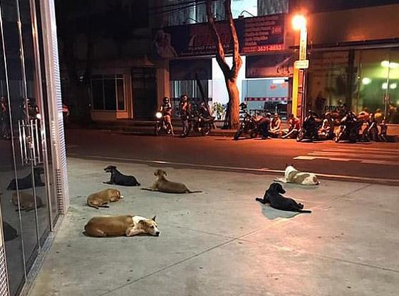كلاب وفية طاردت سيارة إسعاف حملت صاحبها وبقيت أمام المستشفى تنتظره! صورة رقم 1