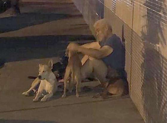 كلاب وفية طاردت سيارة إسعاف حملت صاحبها وبقيت أمام المستشفى تنتظره! صورة رقم 2