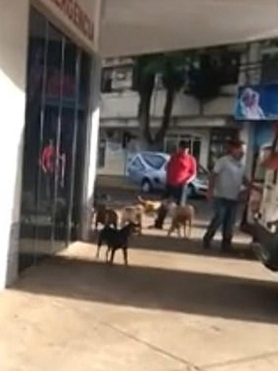 كلاب وفية طاردت سيارة إسعاف حملت صاحبها وبقيت أمام المستشفى تنتظره! صورة رقم 4