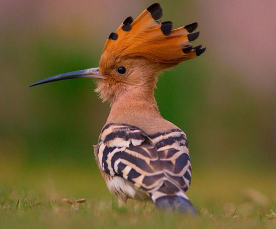 أشهر الطيور وصفاتها.. أي منهم الأقرب إلى شخصيتكم؟ صورة رقم 2
