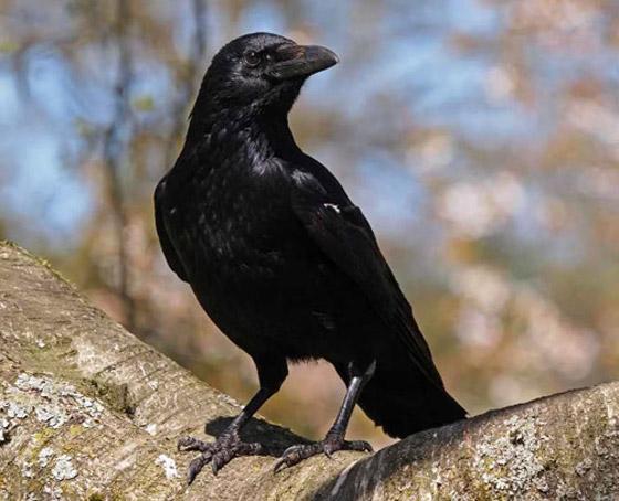 أشهر الطيور وصفاتها.. أي منهم الأقرب إلى شخصيتكم؟ صورة رقم 3