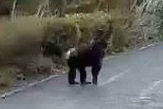 بالفيديو.. شمبانزي عبقري يخترع طريقة ليهرب من حديقة الحيوان صورة رقم 4