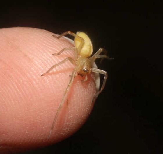 بالصور: تعرفوا على أكثر العناكب السامة فتكاً بالإنسان  صورة رقم 4