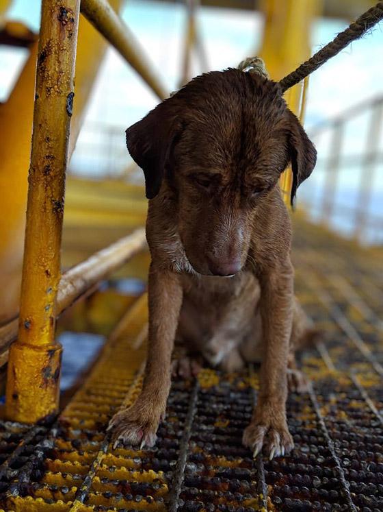 إنقاذ كلب تمكن من السباحة مسافة تزيد على 220 كم في البحر! صورة رقم 2