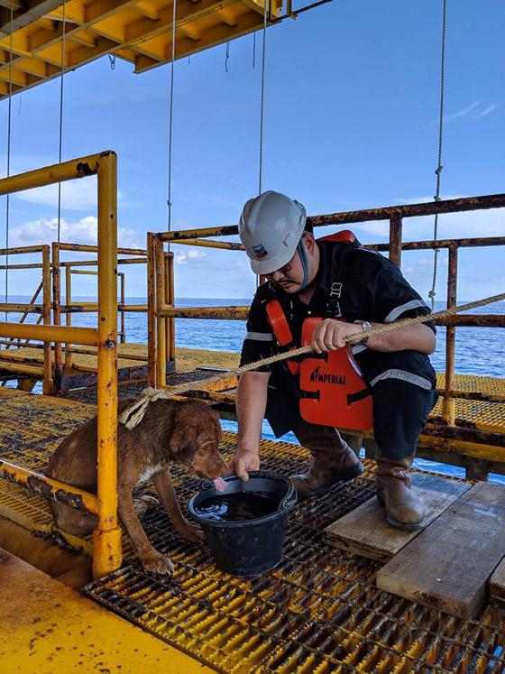 إنقاذ كلب تمكن من السباحة مسافة تزيد على 220 كم في البحر! صورة رقم 3