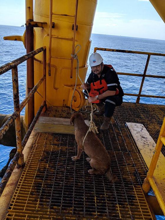 إنقاذ كلب تمكن من السباحة مسافة تزيد على 220 كم في البحر! صورة رقم 6