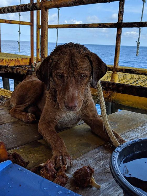 إنقاذ كلب تمكن من السباحة مسافة تزيد على 220 كم في البحر! صورة رقم 8