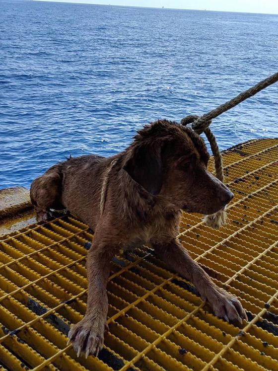 إنقاذ كلب تمكن من السباحة مسافة تزيد على 220 كم في البحر! صورة رقم 9