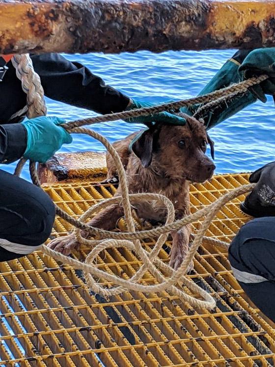 إنقاذ كلب تمكن من السباحة مسافة تزيد على 220 كم في البحر! صورة رقم 11