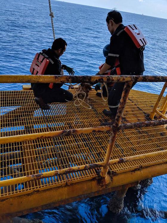 إنقاذ كلب تمكن من السباحة مسافة تزيد على 220 كم في البحر! صورة رقم 12