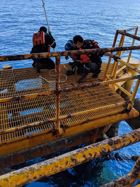 إنقاذ كلب تمكن من السباحة مسافة تزيد على 220 كم في البحر! صورة رقم 13