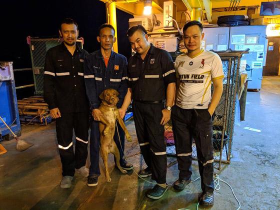 إنقاذ كلب تمكن من السباحة مسافة تزيد على 220 كم في البحر! صورة رقم 16