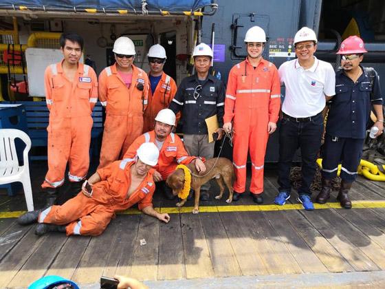 إنقاذ كلب تمكن من السباحة مسافة تزيد على 220 كم في البحر! صورة رقم 18